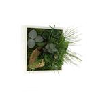 Tableau Végétal Stabilisé MONO 21x21 - FLOWERBOX