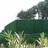 Haie artificielle Supra 126 brins Vert Thuyas - JET7GARDEN