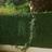 Plaque murale feuillage effet buis 3m2 - JET7GARDEN