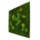 Tableau végétal mousse stabilisé BASIC - Carré XL 80x80 - NATURALYS verifier le produit à la livraison