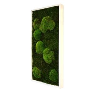 Tableau végétal mousse stabilisé BASIC - Rectangle 27x57 - NATURALYS verifier le produit à la livraison